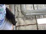 Pantyless upskirt on hidden cam at the store
